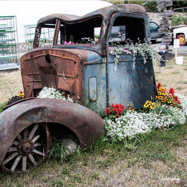 Old Truck with Flowers by Kelly Cushing Photography