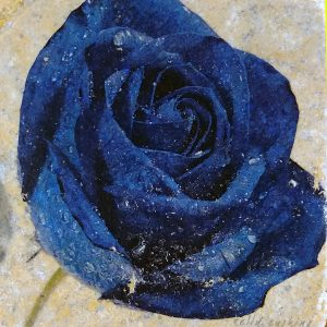 Blue Rose Coaster by Kelly Cushing