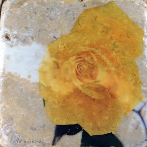 Yellow Rose 2 Coaster by Kelly Cushing