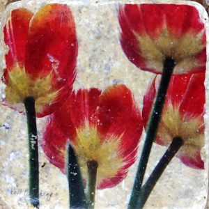4 Red Tulips Coaster by Kelly Cushing