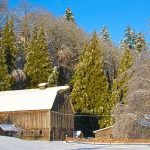 Carman Barn in Winter, Chilliwack, BC