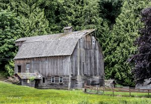 Carman Barn in Summer, Chilliwack, BC
