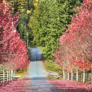 Autumn Road, Columbia Valley, BC