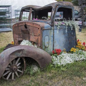Vintage Truck with Flowers, Clinton, BC