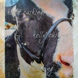 Close Up Cow Wall Decor by Kelly Cushing