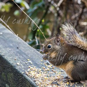 Lunchtime for a Squirrel Wall Decor