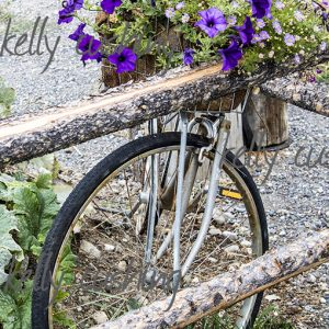 Old Bike with purple flowers