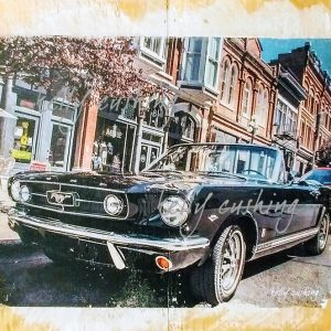 Black Mustang in Victoria by Kelly Cushing