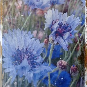 Purple Cornflower Wall Decor