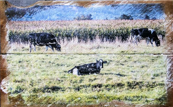 Cows in Field Wall Decor