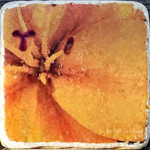 Orange Iris Coaster by Kelly Cushing