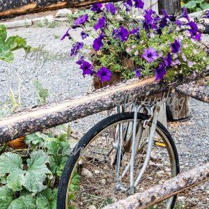 Bike with Purple Flowers