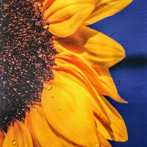 Print of Canvas of half a sunflower