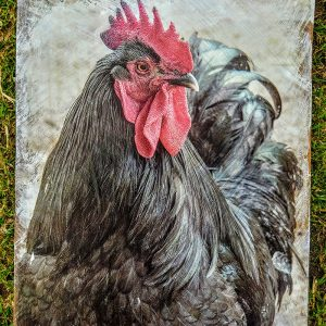 Black Rooster Wall Decor Kelly Cushing